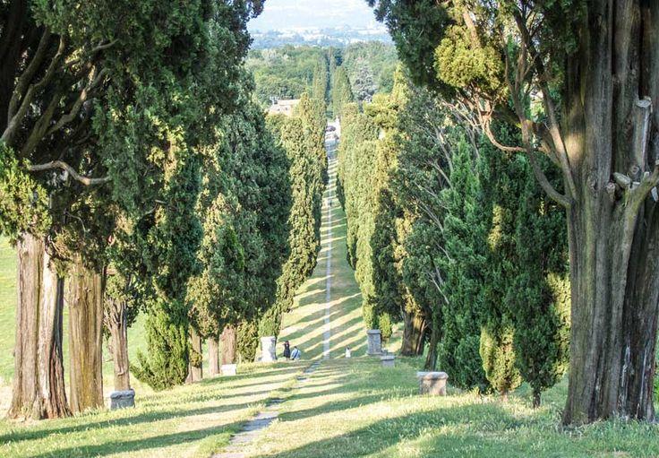 Viale dei cipressi - Inverigo
