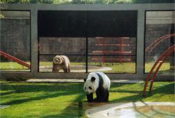 Zoologico de Chapultepec Df mexico
