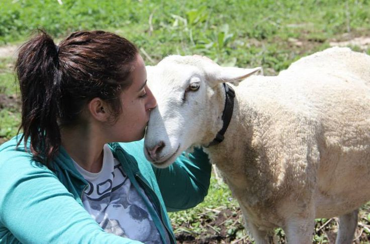 Many farm animal sanctuaries have been established nationwide to care for these formerly abused animals. And what a rewarding way to spend some free time!
