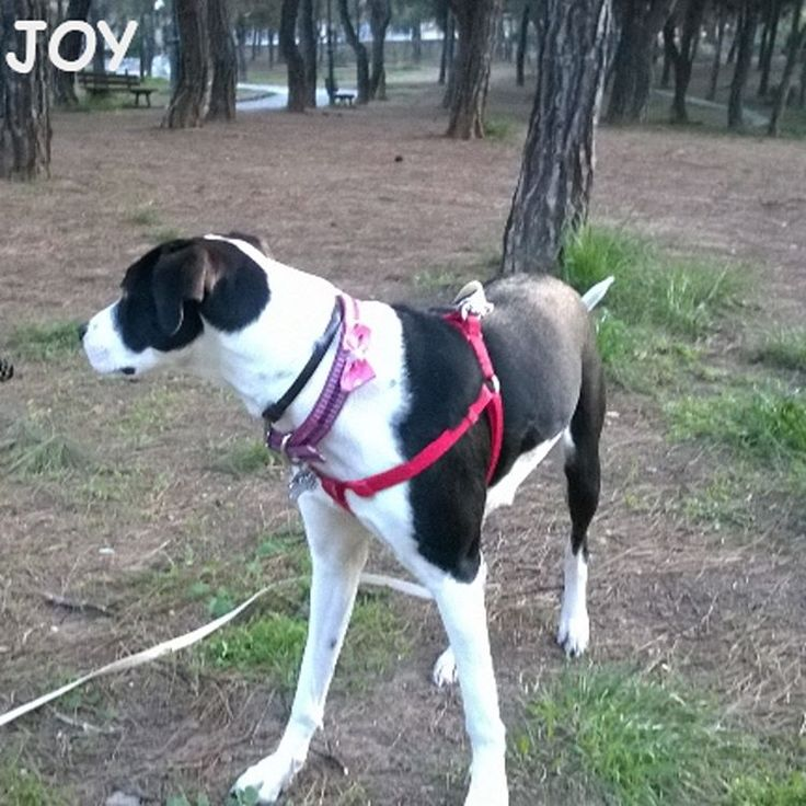 Dad took me today to a new huge park with lots of trees for exploration. But we didn't find any squirrels! 🐾🐾🐶 Follow JOY at her Facebook page for many more photos and videos:  https://www.facebook.com/JOYMixedBreedGirl/  #dog #instagramdogs #ilovemydog #instapuppy #dogfamily #doggie #ilovemypet #dogofinstagram #happydog #dogface #dogsofig #dogselfie #doglovers #dogsofinstaworld #petstagram #doglover  #petlover #instadog #dailypawwoof #happydog_feature #dogsubmit