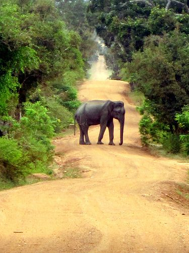 #41 A safari at Yala National Park, Sri Lanka. The second largest national park in the country, Yala is known for the diversity of its eco-system including many species endemic to Sri Lanka. (www.secretlanka.com)