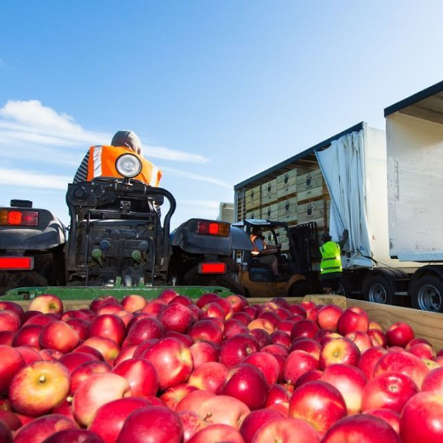 The ROCKIT project; which started out as just 1-2 orchards in Hawke's Bay, New Zealand is now ever-expanding with licensed growers in the UK, USA, Australia, Belgium, Italy and more countries #bigidea #apples #HawkesBay #GreatThingsGrowHere