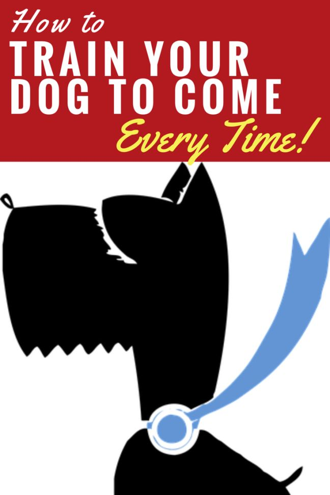 How to Train Your Dog to Come Every Time