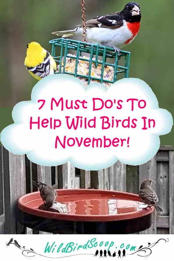 Bird Watching Guide November A Monthly Series To Help Wild Birds In 2020 Wild Birds Unlimited Wild Birds Bird Watching