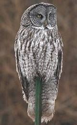 20 Fun Facts about Owls