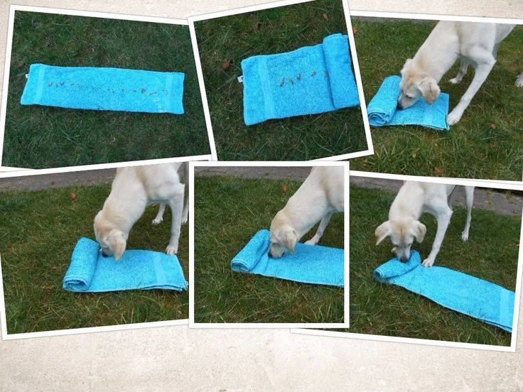 DIY cheap brain games for dogs, also suitable for cats.