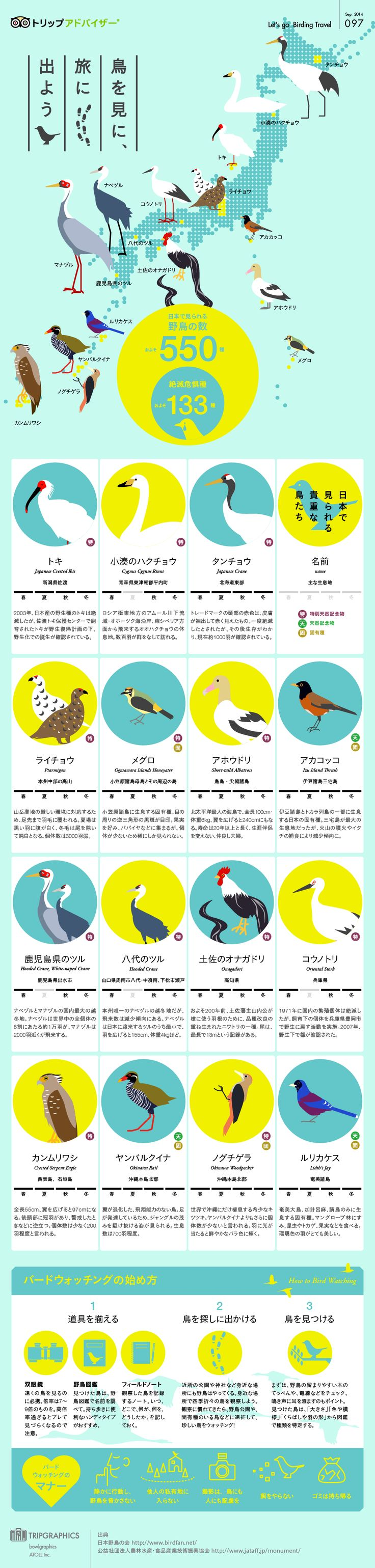 鳥を見に旅に出よう トリップアドバイザーのインフォグラフィックスで世界の旅が見える // Hi Friends, look what I just found on #web #design! Make sure to follow us @moirestudiosjkt to see more pins like this | Moire Studios is a thriving website and graphic design studio based in Jakarta, Indonesia.