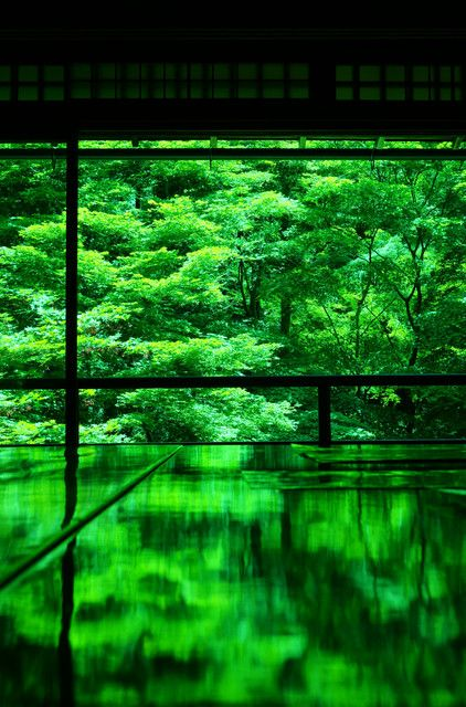 Ruriko-in Temple, Kyoto, Japan #緑 #green #Kyoto #reflection