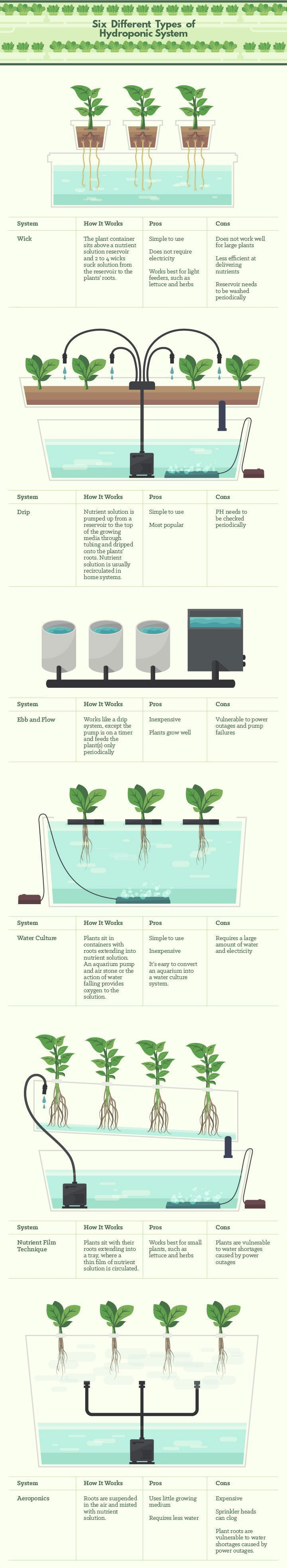Six Different Types of Hydroponics: