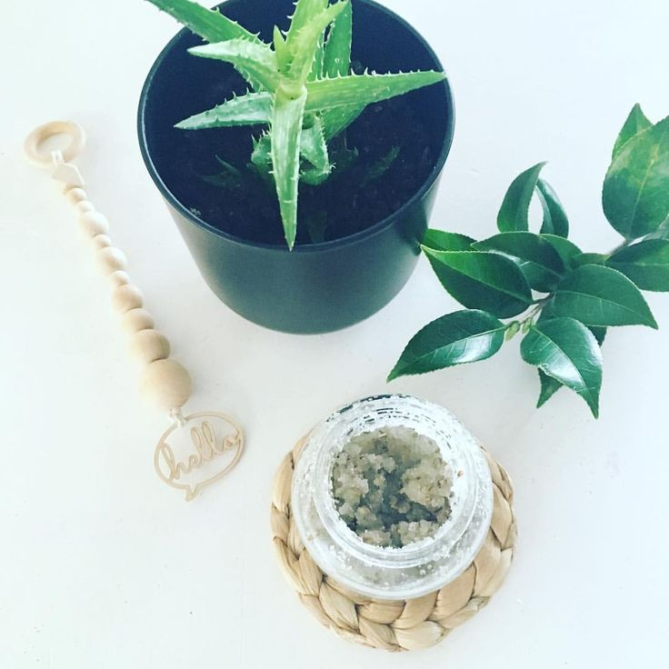 "25 Likes, 7 Comments - Nidie Bo (@nidie_bo) on Instagram: ""Homemade body scrub goodness 👌🏻🌿#nidiebo #hello #bodyscrub #homemade #indoorplants #succulents…"""