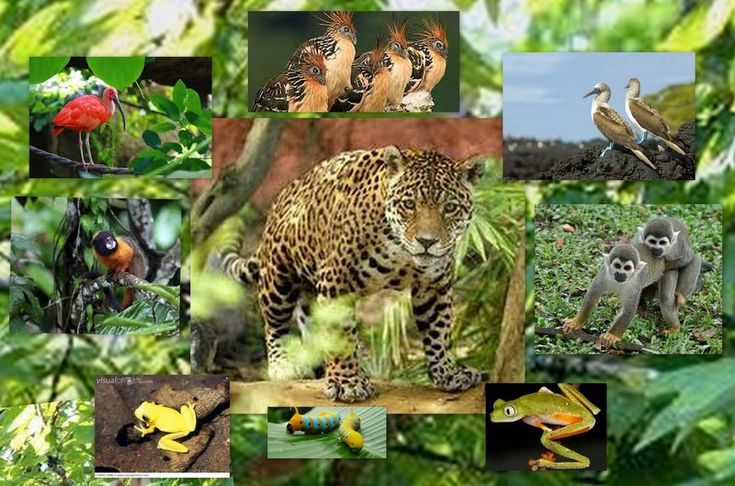 amazon rainforest plants collage. animal rainforest collage amazon pinterest and plants t