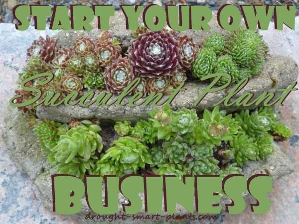 how to start a succulent business