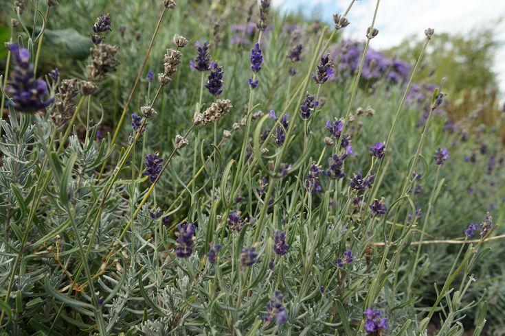 Hoher Heckenbambus in 2020 Sichtschutz pflanzen