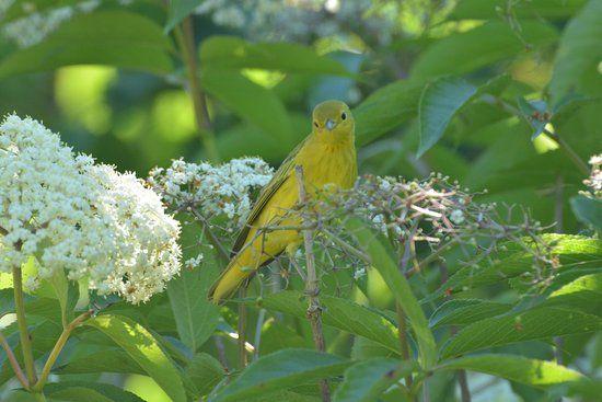Charlotte Rhoades Garden and Butterfly Park (Southwest Harbor, ME ...