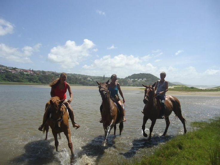 Horse Rehabilitation Project. This can be you!! Don't miss out on some great fun & changing these horses' lives forever!!