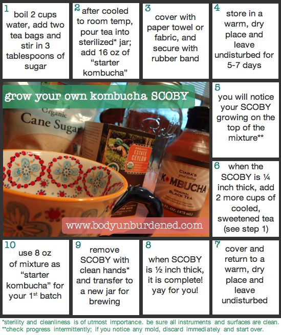 How to grow your own kombucha SCOBY in 10 steps