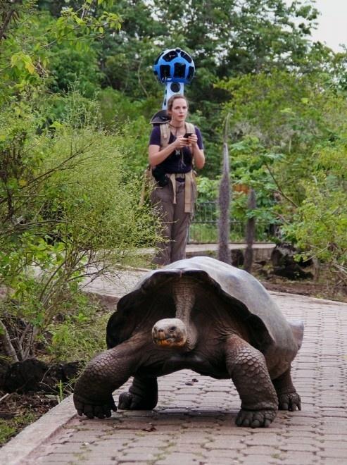 Google sbarca alle Galapagos: Street View tra tartarughe e leoni marini