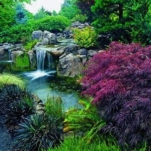 Built on the edge of the property line, a concrete block wall supports the elevated waterfall formed from earth dug out of what became a 4-foot-deep koi pond. Huge boulders were artfully arranged to create the naturalistic scene.