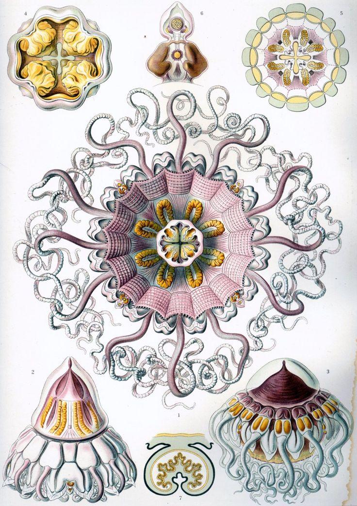 Medúzovce.