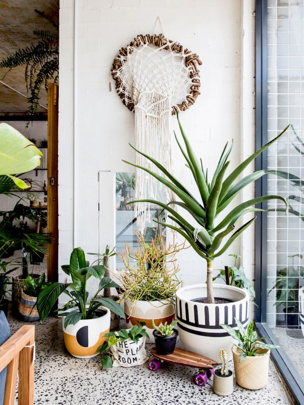 238 Best Indoor Plants Greenery Images On Pinterest: plant room design