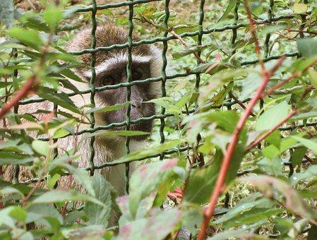 Monkey, Animal Rights, Animal, Law