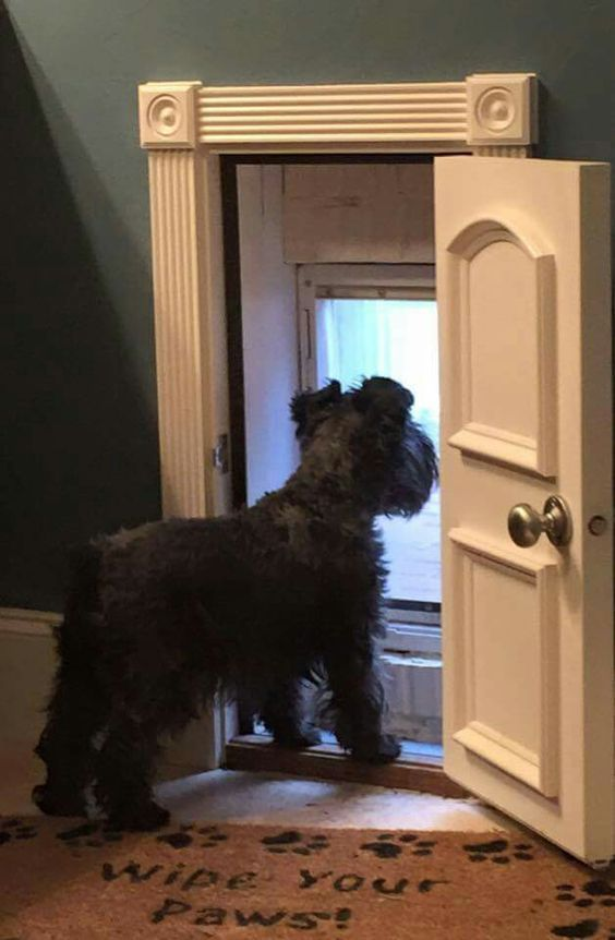 ♡ A Doggy Door! ~ This way you can still have sliding patio doors, AND lock the doggy door if you need to!:
