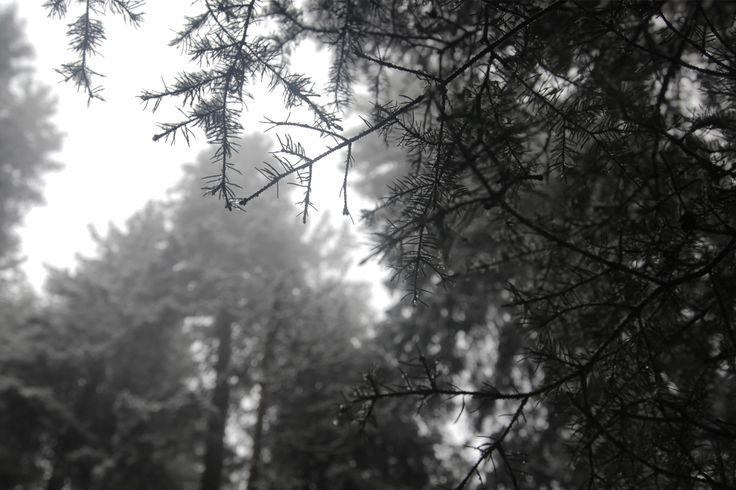 Jungfrau-forest-snow-02.jpg