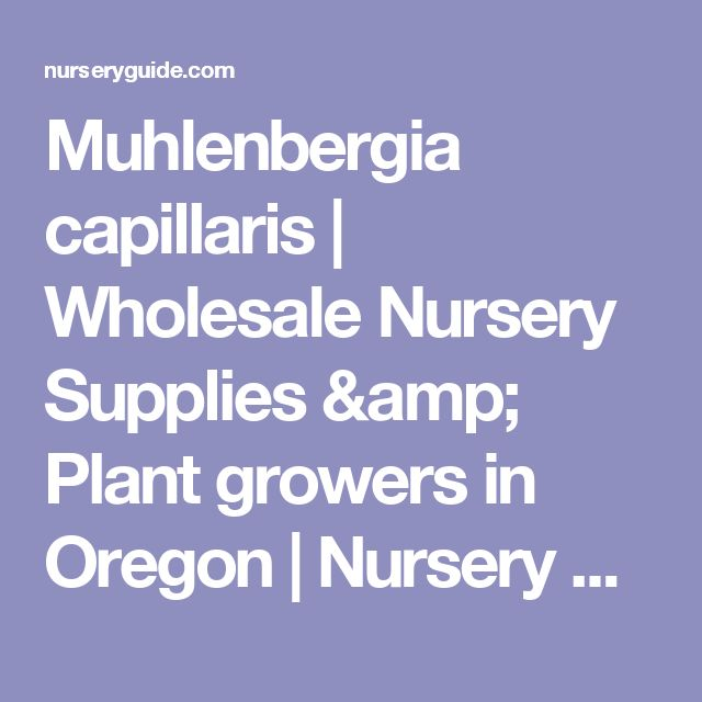 Muhlenbergia capillaris | Wholesale Nursery Supplies & Plant growers in Oregon | Nursery Guide