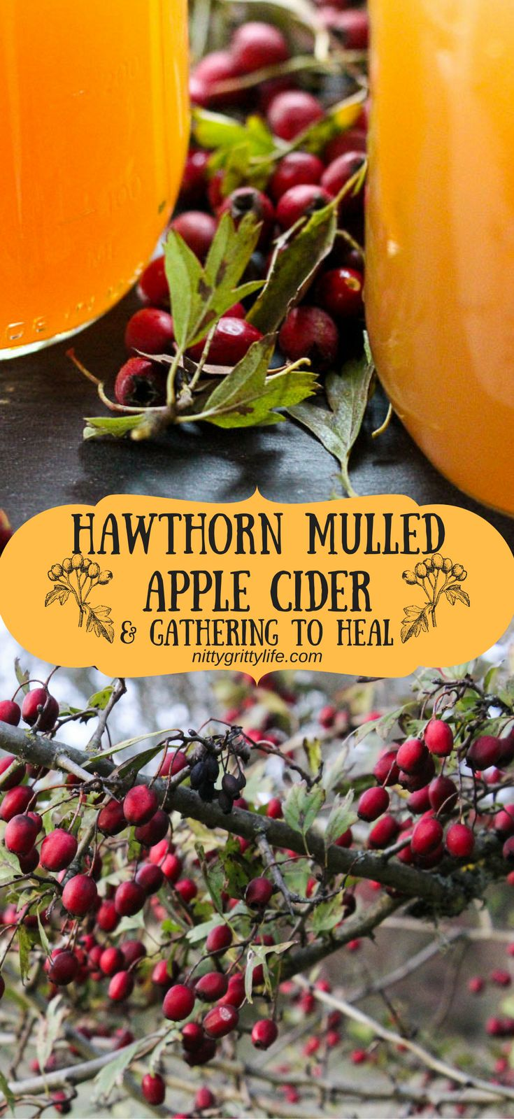 Gather around for a mug of uplifting, magical hawthorn mulled apple cider to mend our metaphorical hearts during times of great sorrow and grief. via @nittygrittylife