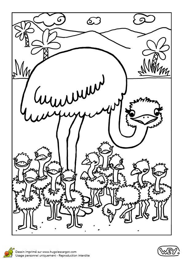 Coloriage la Maman Autruche et ses Bébés - Hugolescargot.com