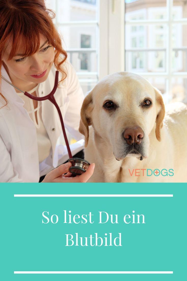 Das Blutbild Beim Hund So Interpretierst Du Es Als Hundebesitzer Hunde Tierarzt Hundetraining