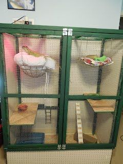 I made this cage for my iguana DiNozzo. If she looks a little lost, it is because she now has about five times more room!