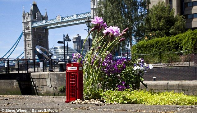 Towering plants: A mini pot hole garden with a telephone box by Tower Bridge, London