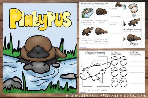 This Platypus unit will help you learn so much about this unique Australia animal.