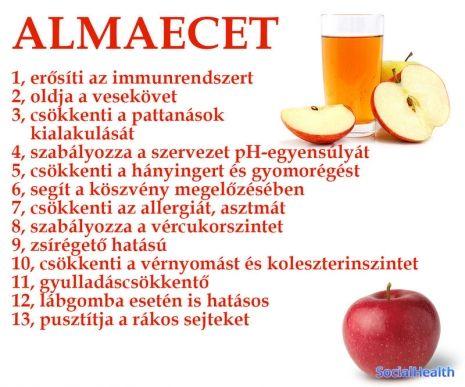 Almaecet - 13 ok