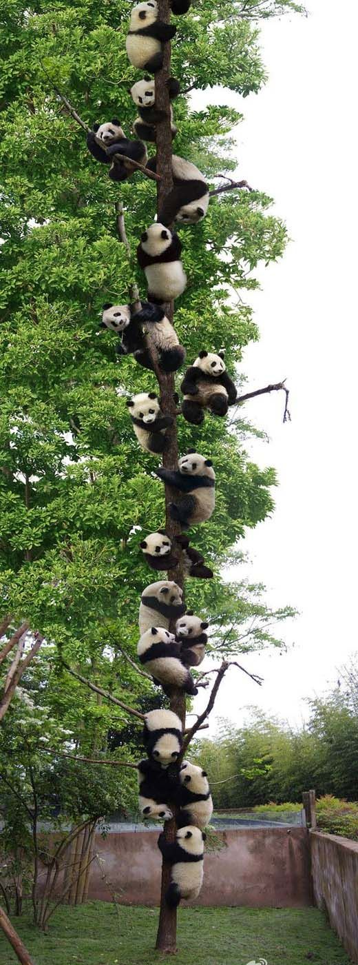 top-funny-captions | Modren Villa panda tree