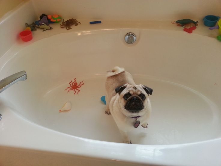 """ilovepugs:  """"Mom? What's going on…"""""""