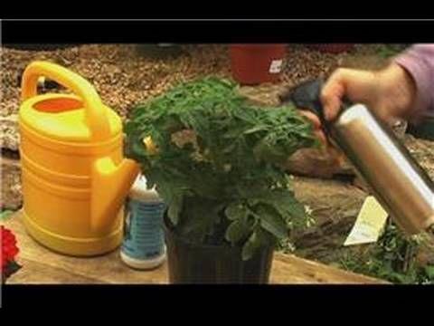 An Organic Gardening How To – Foliar Feeding Besides The 400 x 300