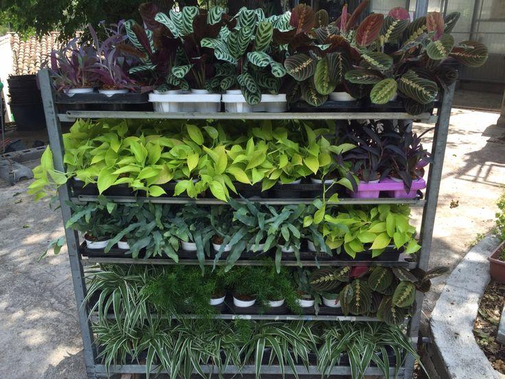 Selección de plantas para proyecto Taberna La Charca