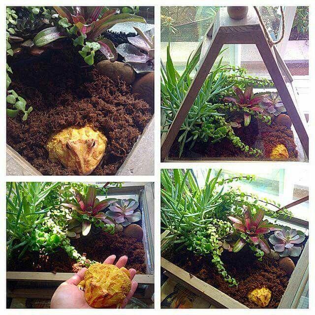 Home Aquarium Ideas: The Aquarium Buyers Guide Pacman frog setup