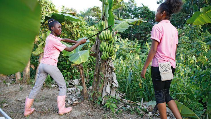 SURINAME - Het Maria Internaat heeft een stuk grond buiten de hoofdstad Paramaribo waar leerlingen van het internaat groenten verbouwen.