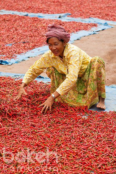 Khmer farmer drying red chili peppers | Kampong Cham Province, Cambodia