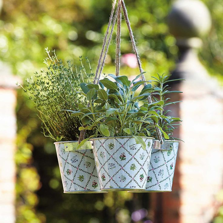 Transform your Garden into a Tranquil Haven #kaleidoscope #blog #garden