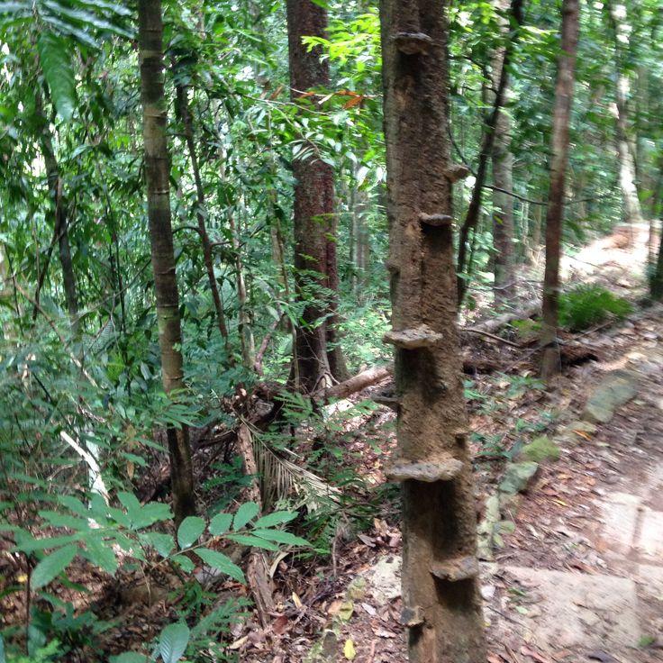 Lichen steps.