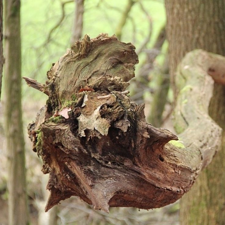 Forest Monster Photo - Visual Hunt