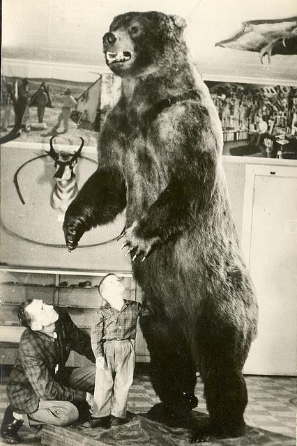 Crawford Grayling Fred Bear Museum Bear Big Game Hunting