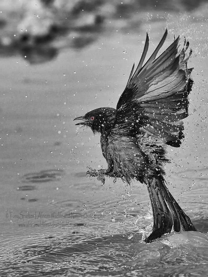 Watery Take Off... by Tony Sparkes on 500px