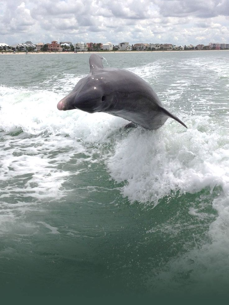 Fort Myers Beach Dolphin Amp Sunset Boat Tours Cruises Near