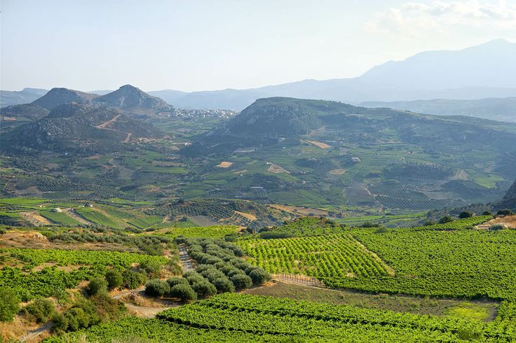 Vineyards, Crete, Greece