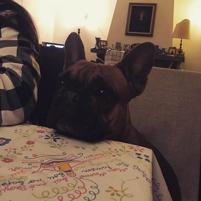 Looks like we have a little intruder at the dinner table  #cookie #frenchie #frenchbulldog